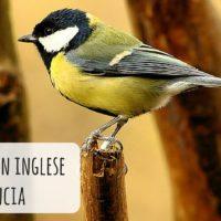 Gli animali in inglese con pronuncia