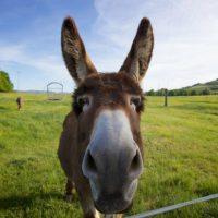 Nomes de animais com pronúncia em inglês