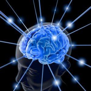 elearning cerveaux neurones