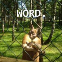 10 expressions de slang australien à connaître absolument