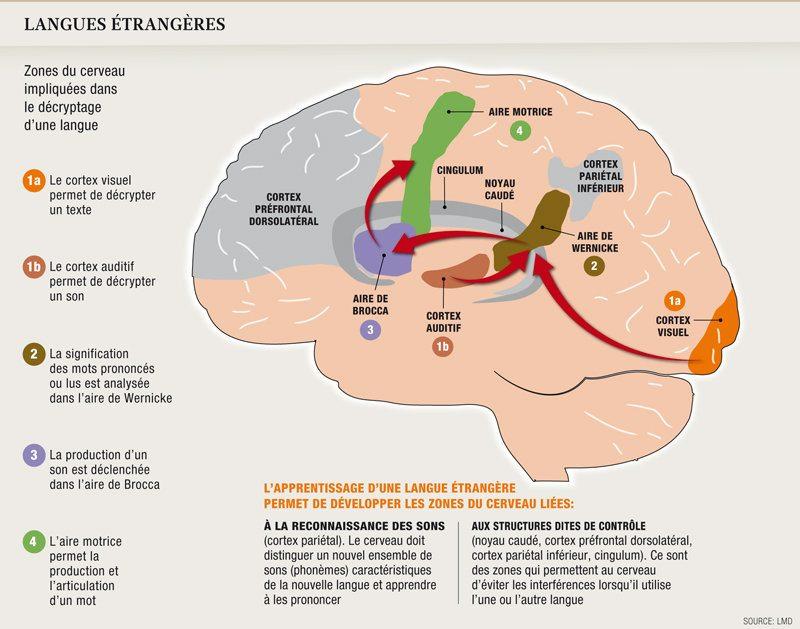 Anatomie d'un polyglotte
