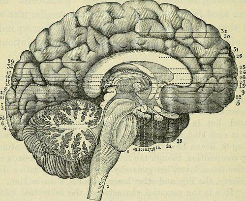 By: Internet Archive Book Images Apprentissage des langues : étude sur le cerveau humain... des hommes et des femmes.